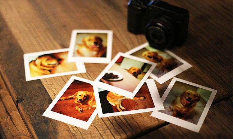 What Does It Mean To Dream About Photos-Dreams Interpretation Online