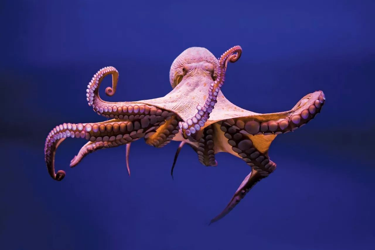 Dreams About Octopus-17 Dream Meaning and Interpretation