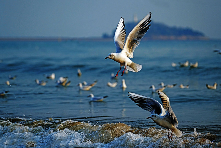 What Does It Mean To Dream Of Seagulls?-Dreams Interpretation Online