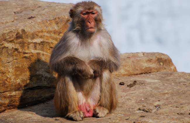 What Is The Sign of Dreaming about Monkeys?-Dreams Interpretation Online