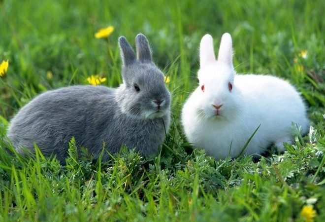 Top 16 Dreams About Rabbits-Dream Meaning and Interpretation