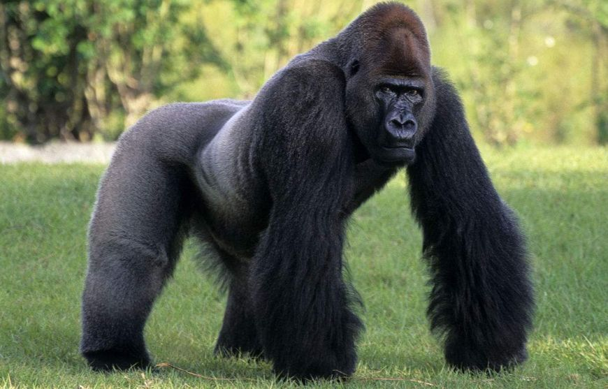Is It Bad Luck to Dream of An Orangutan?-Dreams Interpretation Online
