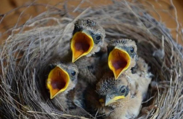 What Does It Mean to Dream of A Baby Bird?-Dreams Interpretation Online