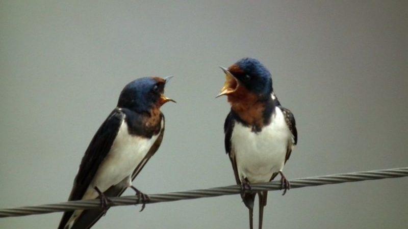 #19 Swallow Dream Interpretation- Dream meaning