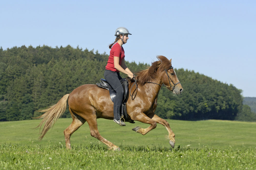 Dreaming About Horse Riding-Dream Meaning and Symbol