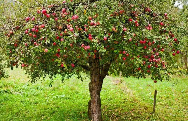 Dreaming About Fruit Trees-Dream Meaning and Symbol