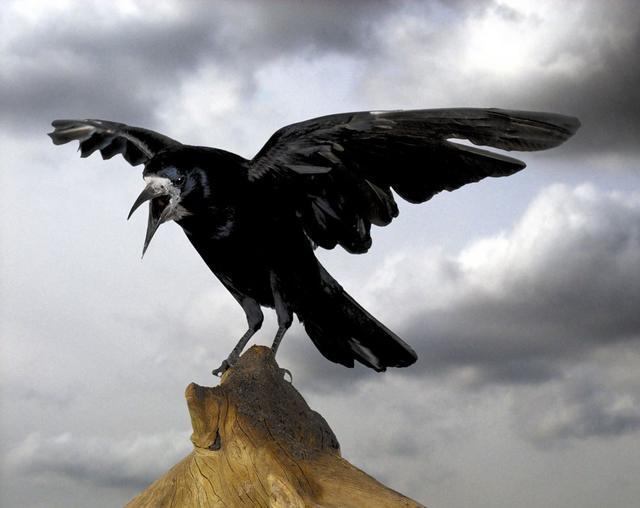 Is It Bad Luck To Dream Of A Crow? Dreams Interpretation