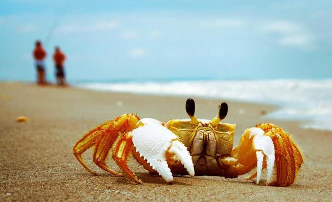 What Does It Mean To Dream About Crabs?-Dreams Interpretation
