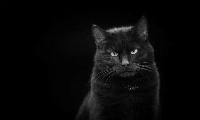 Is It Good to See Black Cat in Dream?-Dreams Interpretation