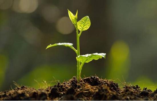 #16 Tree Planting Dream-Dream Meaning and Interpretation