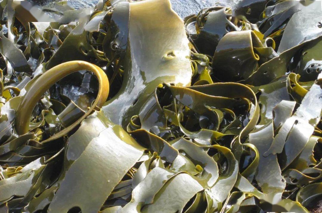 What Does Kelp Symbolize in Your Dream?-Dreams Interpretation Online