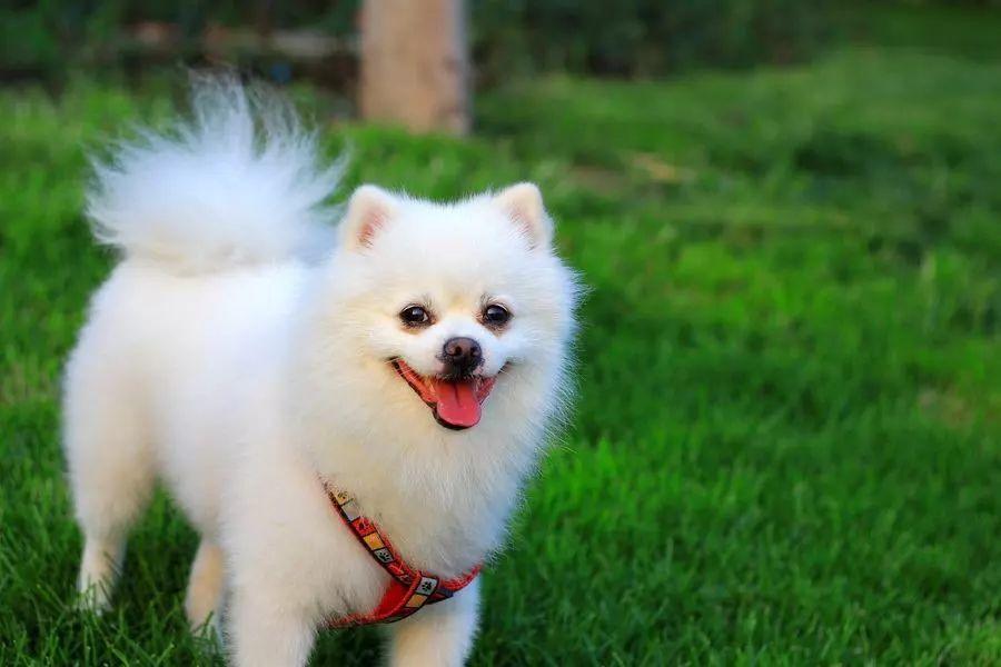 Top 4 White Dog Dream Interpretation-Dream Meaning