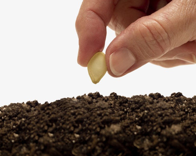 Dream About Seed Sowing- Dream Meaning And Symbol