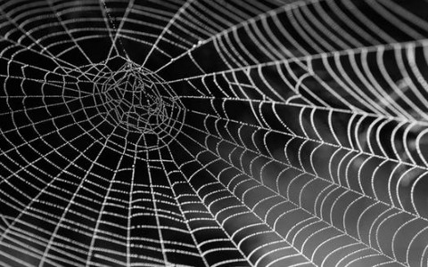 Dreams About Spiders Webs: Dream Meaning and Symbolism