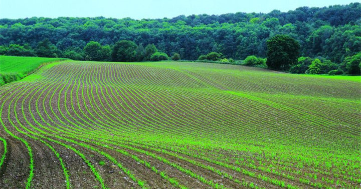 Why Do I Dream of Farmland?-Dreams Interpretation Online