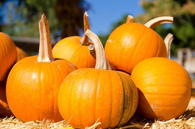 Why Do Pregnant Women Dream of Pumpkins?-Dreams Interpretation