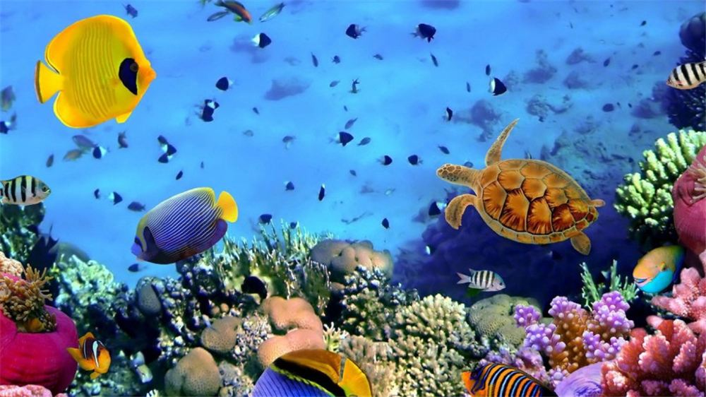 What Does It Mean to Dream of The Seabed?-Dreams Interpretation