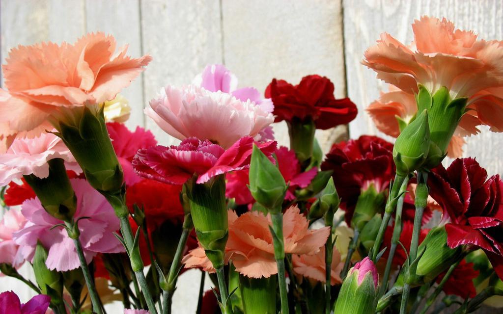 Top 14 Carnation Dreams Interpretation-Dream Meaning and Symbol