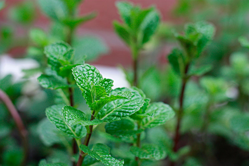 What Does It Mean to Dream of Mint?-Dreams Interpretation Online