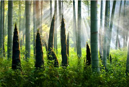 #16 Bamboo Shoot Dreams Interpretation- Dream Meaning and Symbol