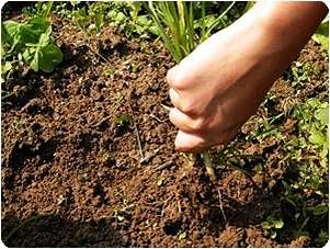 Why Do I Dream of Pulling Weeds?-Dreams Interpretation Online