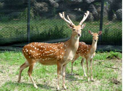 Top 17 Deer Dreams Interpretation- Dream Meaning and Symbol