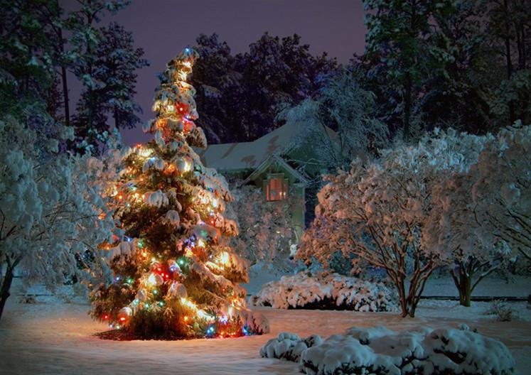 Why Do I dream Of Christmas Tree?-Dreams Interpretation Online