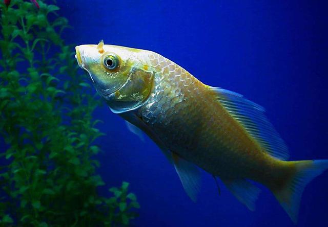 Top 14 Fish Dreams Interpretation-Dream Meaning And Symbol